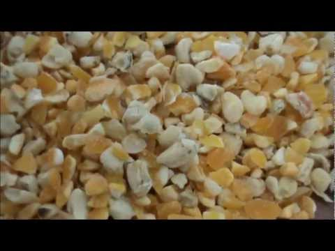 Maize Grits and Germs Production Machinery Plant