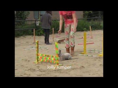 Konijn-Hop geheel los zonder tuigje en riem