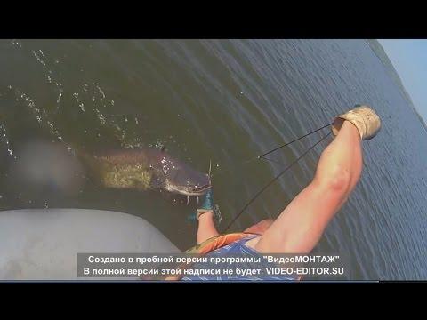 посмотреть видео рыбалка на сома