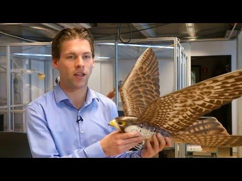 Fliegen wie ein Jagdvogel: Roboter-Falke gegen Vöge ...