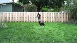Luca the German Shepherd Training With Suburban K9 in Milwaukee