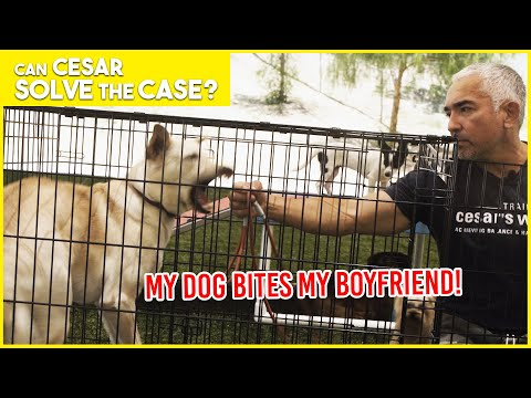 MY DOG BITES MY BOYFRIEND!! | Cesar Solves the Case | Limited Series