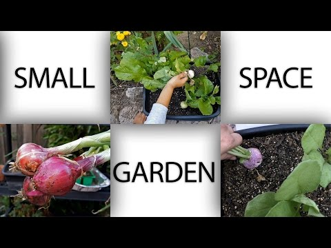 , title : 'Small Space Garden - Ideas To Grow Plants In Apartments, Patios and Small Areas - in 4K'