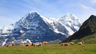Summer in the mountains of Switzerland, in the Swiss alps. Nature video of the beautiful Jungfrau region of Berner Oberland in ...