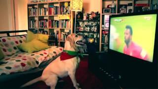 chien labradorsupport cristiano ronaldo