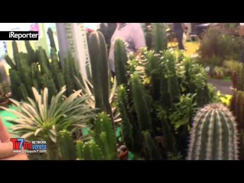 consigli sulla coltivazione delle piante grasse