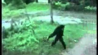 Вижте КАКВО направи маймуната с кучето!