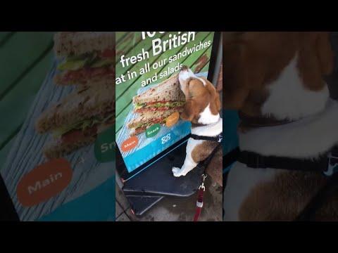 Tälle koiralle maistuisi nyt voileipä