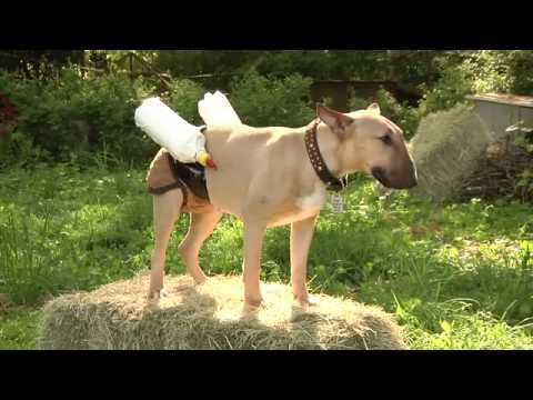 Dog Feeds Baby Goats With Special Milk Pants