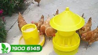 Chăn nuôi gà | Hướng dẫn làm máng ăn, máng uống cho gà đúng tiêu chuẩn
