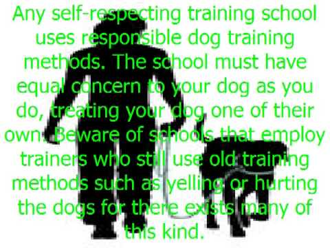 Dog Training Schools: How to Choose