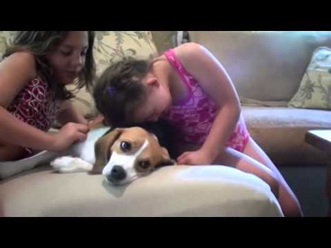 Spanky – From Laboratory Cage to Life Coach – Petco Great Ones Contest Finalist