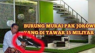 Video BURUNG MURAI PAK JOKOWI DI TAWAR 15 MILIYAR MP3, 3GP, MP4, WEBM, AVI, FLV Maret 2018
