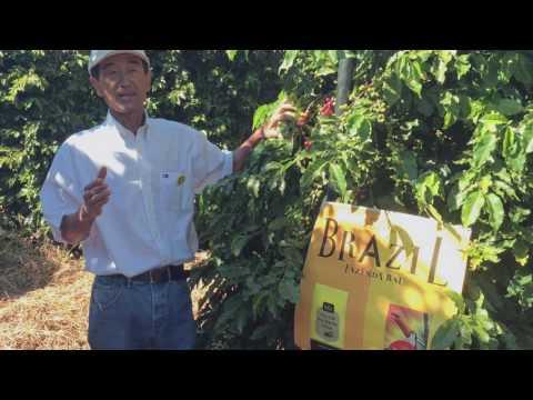Fazenda Baú |Tully's Coffee