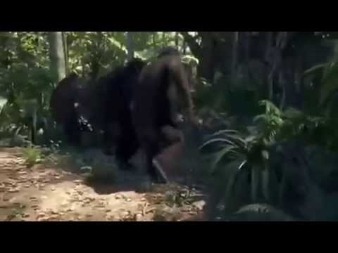 Dancing Gorillas to Kc Pozzy Who Gave You That