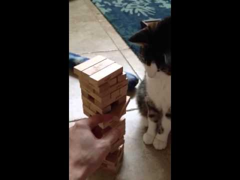This cat is pretty dang good at Jenga