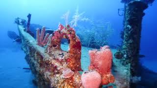 Roatan Diving April 22 & 23