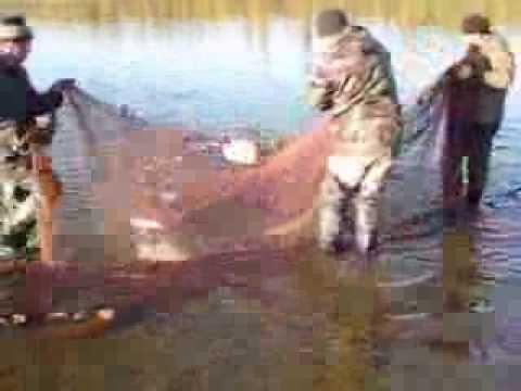 видео ловля сетями на севере