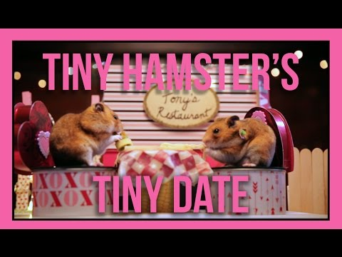 How is the Tiny Hamster\'s Date?