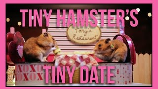 Tiny Hamster's Tiny Date