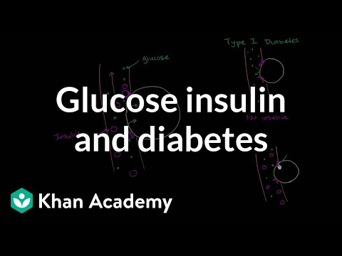 insulin and carbohydrate metabolism