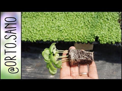 Piante esterno ikea idee per arredare il balcone piccolo for Viridea catalogo arredo giardino