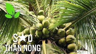 Làm giàu từ cây dừa