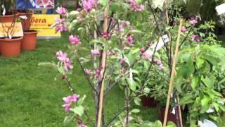 #627 Gartentage Lindau 2012 - Impressionen Teil 2