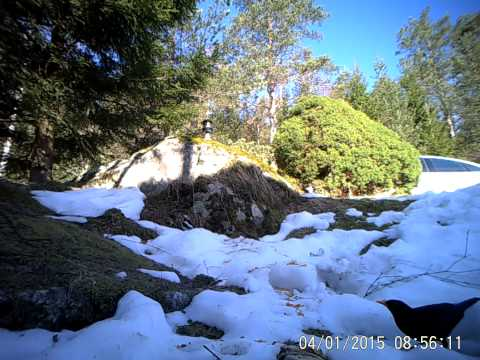 LTL Acorn Trail Camera 6310 WMG MG Video Test Bird