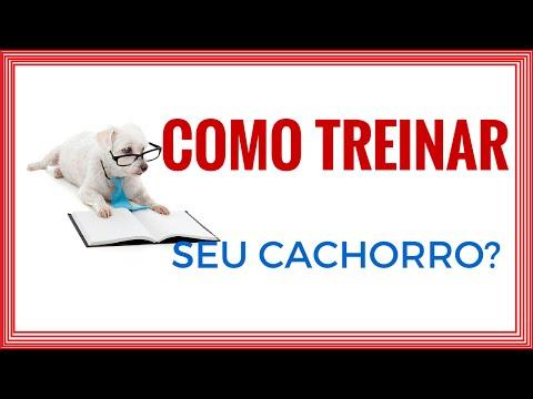 Video Como Treinar Seu Cachorro Filhote ou Adulto? download in MP3, 3GP, MP4, WEBM, AVI, FLV January 2017