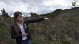 Resultados Restauración Ecológica Macizo Mamapacha y Bijagual