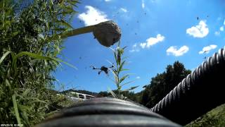 Video Bothering Bald faced hornets with an Action Drone AD-1 MP3, 3GP, MP4, WEBM, AVI, FLV Februari 2019