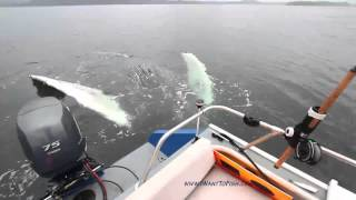Curious Whale Comes To Visit Fisherman