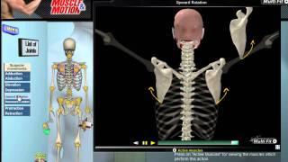 パフォーマンスにつながる知識【肩甲骨の6つの動きを理解する】