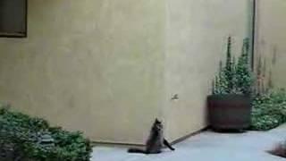 2階から呼ばれた猫→どうするのかと思ったら…すげえええ(笑)!!