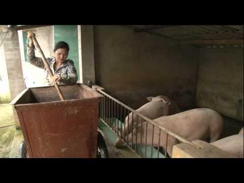 Hải Xuân: Chăn nuôi có nhiều chuyển biến tích cực
