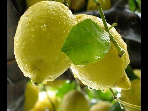 limoncello: la ricetta originale!