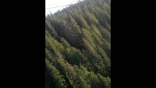 Icy Straight Point Zip Lining 2014 - YouTube