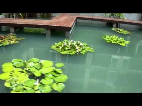 we are professional of  garden waterlily design