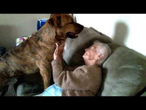Un Perrito Muestra A La Señora Anciana Todo Su Amor: Verlos Juntos Es Un Espectaculo