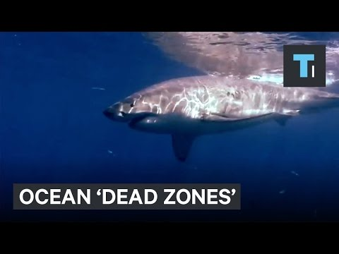 Ocean 'dead zones' exist — and there are more of them than we thought