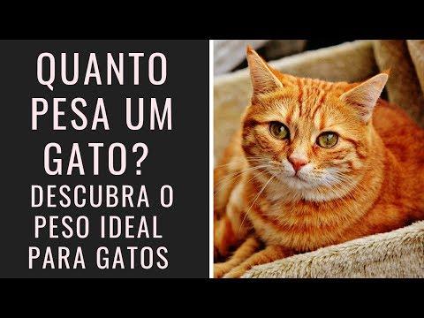 Quanto Pesa Um Gato? Descubra O Peso Ideal Para Gatos!