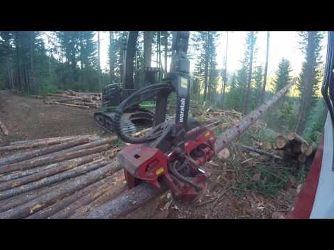 Waratah 623 playing (видео)