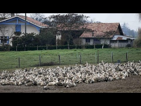 Γαλλία: Σε εφαρμογή έκτακτο σχέδιο για τον περιορισμό της γρίπης των πτηνών