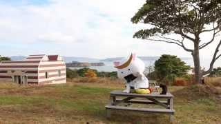 「むすび丸の【伊達な旅】日記」猫の島田代島編