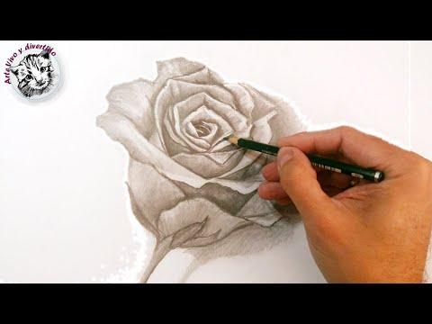 C mo dibujar una rosa a l piz paso a paso t cnicas de - Como pintarse bien ...