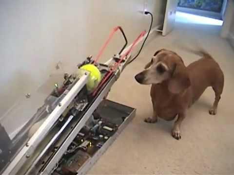 A mérnök és a kutyája