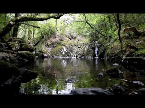 johnnielawson - Relax with these calming sounds, the tranquil music of water flowing over a waterfall and the soothing meditative sound of water dripping amongst the rocks i...