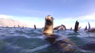 Fin whales, sea lions, common dolphins & stingrays.