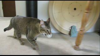 L'invention qui oblige le chat à chasser s'il veut manger.